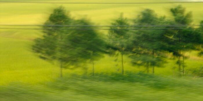 experimental photo art, a blurry green landscape with small fir trees