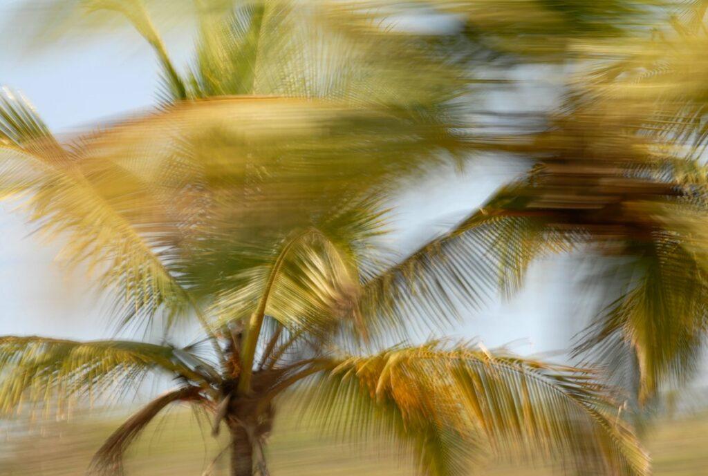 Fotokunst, ein Palmenwipfel mit Bewegungsunschärfe, stellenweise sehr verwischt, stellenweise sehr detailreich