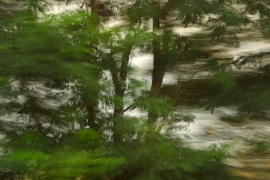 bewegungsunscharfe Fotografie, unterschiedlich stark verschwommene Baumblätter und dunkle Stämme vor hellem Hintergrund