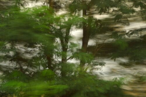 photo art, a dark detail of treetops turned blurry by motion