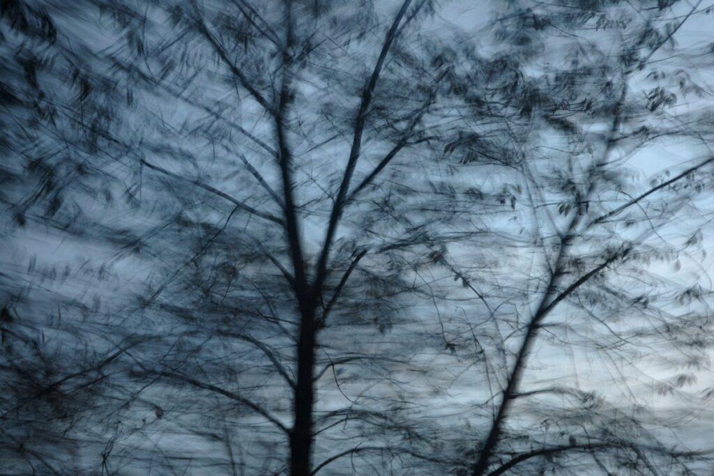 experimentelle Fotokunst, vereinzelte Blätter an kahlen Zweigen vor dunkelblauem Himmel