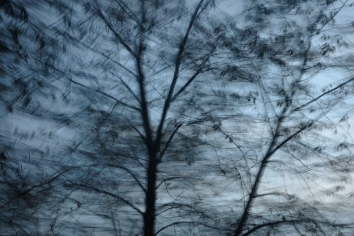 experimental photo art, a treetop with a few leaves turned half transparent by motion blur