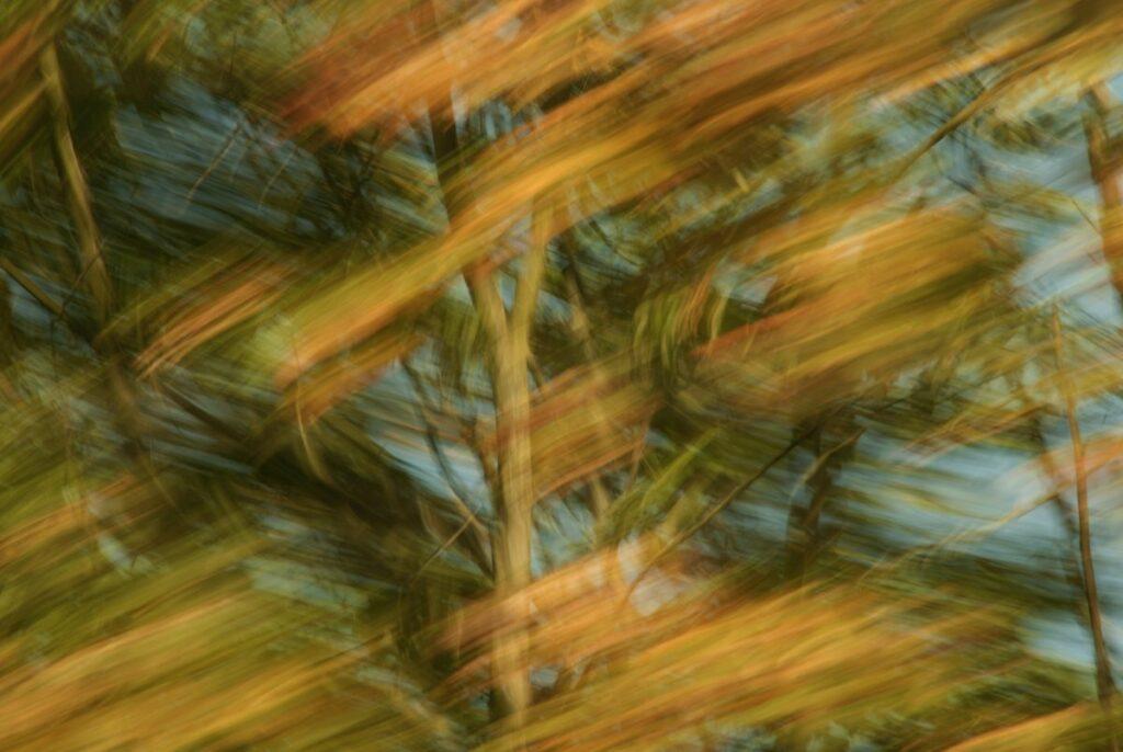 experimentelle Fotokunst, bunte Herbstblätter mit starker Bewegungsunschärfe