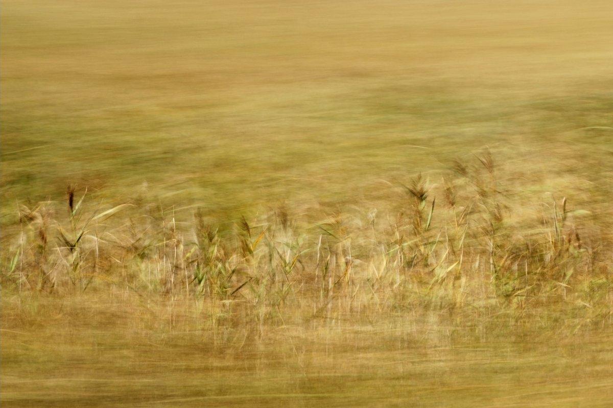 Landschaftsfotografie in Bewegung, Im Vordergund und HIntergrund stark verwischt, in Mittelfeld Details von Schilf erkennbar, warme Beigetöne