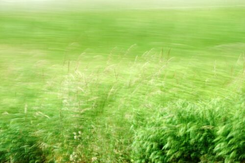experimental photography, detailed grasses in front of strongly blurred background