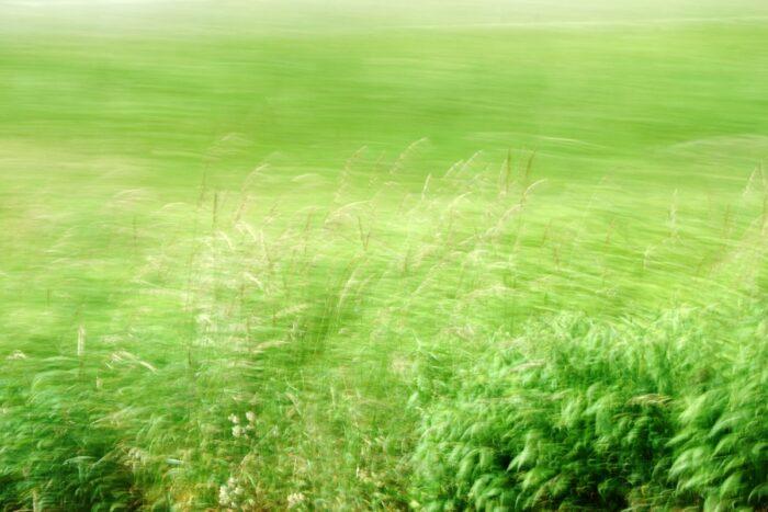 bewegungsunscharfe Fotografie einer Wiese, einzelne Halme sind vor stark verwischtem Hintergrund deutlich zu erkennen