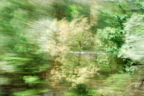 landscape in motion, photograph of treetops in different hues of green, silver and golden with motion blur