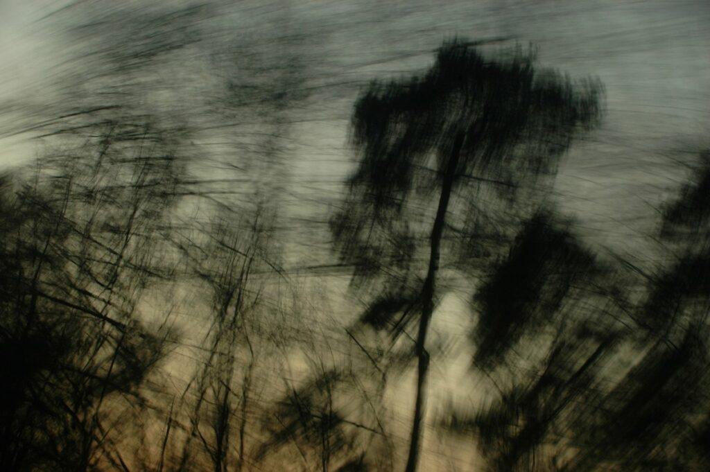bewegte Fotografie, schwarze Silhouetten von Bäumen sind vor einem dunklen Abendhimmel vewischt zu erkennen. Der Himmel hat einen Farbverlauf von oben dunkelblau zu leicht rosa am unteren Bildrand