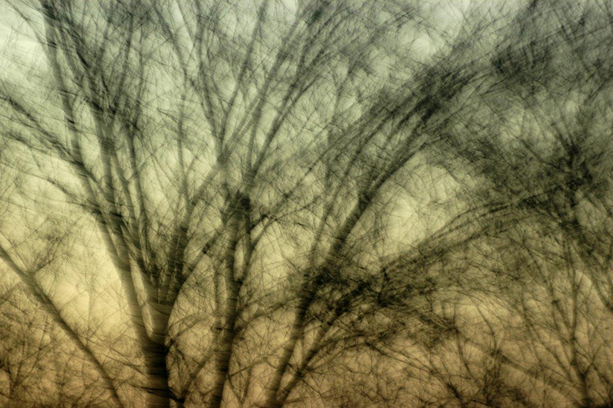 experimentelle Fotokunst, teiltransparentes schwarzes Astewerk vor einem Himmel mit Abenddämmerung