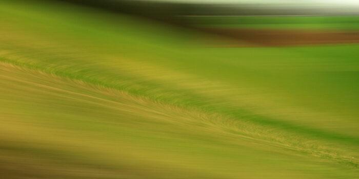 abstrakte Landschaftsfotografie mit starker Bewegungsunschärfe, diagonal durchs Bild laufende Schärfe, ansonsten verwischte Grüntöne mit gelb und braun.