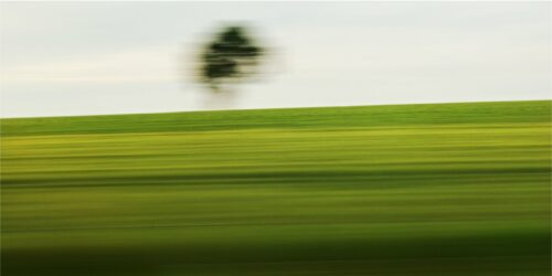 landscape photography in motion, a field reduced to different shades of green by motion blur, above the horizon a shadow of a tree is visible
