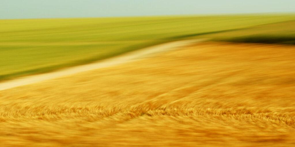 experimentelles Fotokunstwerk mit Bewegungsunschärfe, ein goldes Getreidefeld, dem die Geschwindigkeit anzusehen ist, wird durch einen Weg von der noch stärker verfremdeten grünen WIese im Hintergrund abgetrennt