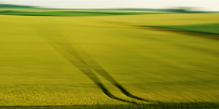 experimental photography, a yellow field with dark imressions turned blurry and soft by motion